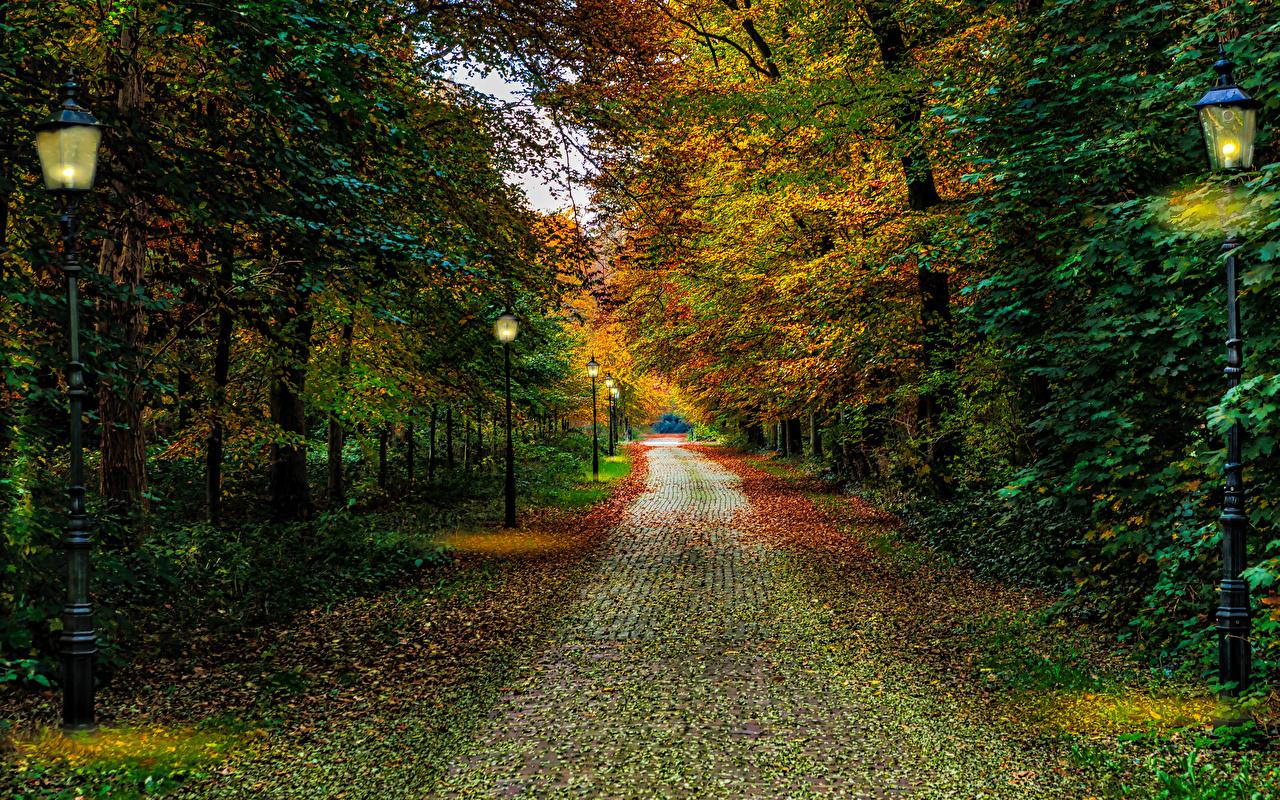 Фотография Нидерланды Driebergen Utrecht Осень Природа Парки Уличные фонари Деревья голландия осенние парк дерево дерева деревьев