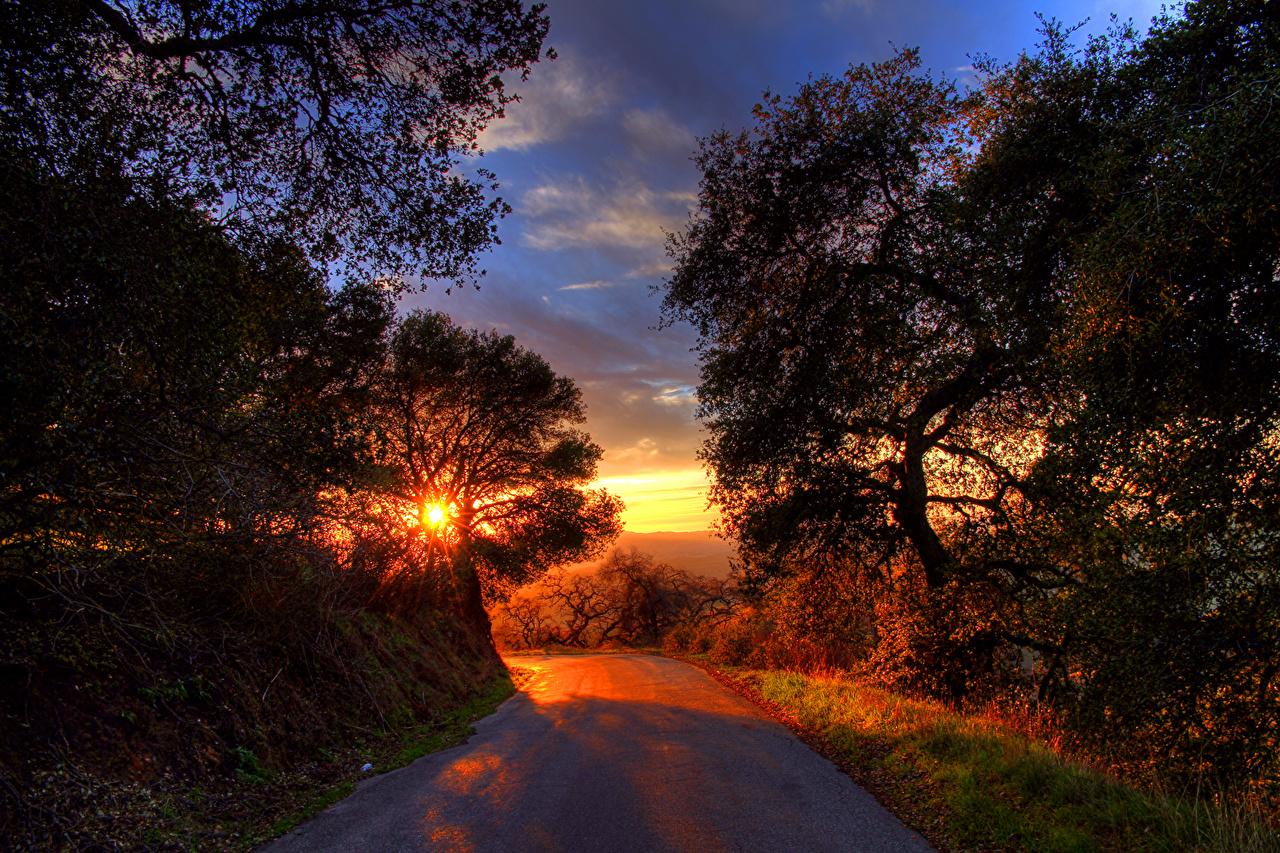 Обои для рабочего стола Природа Дороги Рассветы и закаты деревьев рассвет и закат дерево дерева Деревья