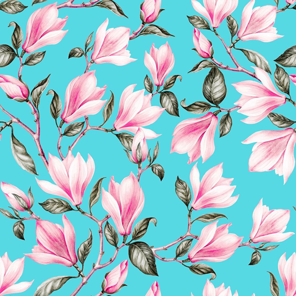 Фото Листва Текстура голубых розовая цветок Магнолия Ветки Рисованные лист Листья голубая голубые Голубой Розовый розовые розовых Цветы ветвь ветка на ветке