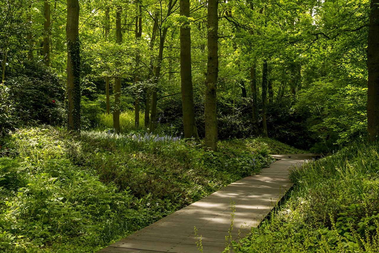 Фото Нидерланды Keukenhof Gardens Природа Парки Трава Деревья