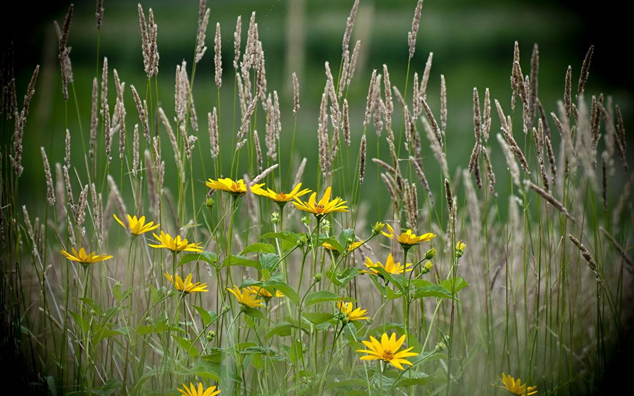 Фото Природа Цветы Трава цветок траве