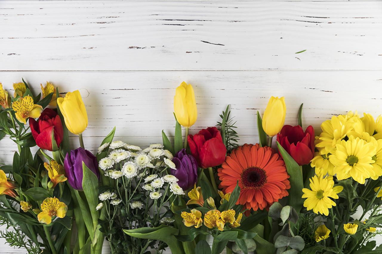 Фотография Герберы Тюльпаны цветок Хризантемы Альстрёмерия Доски тюльпан гербера Цветы