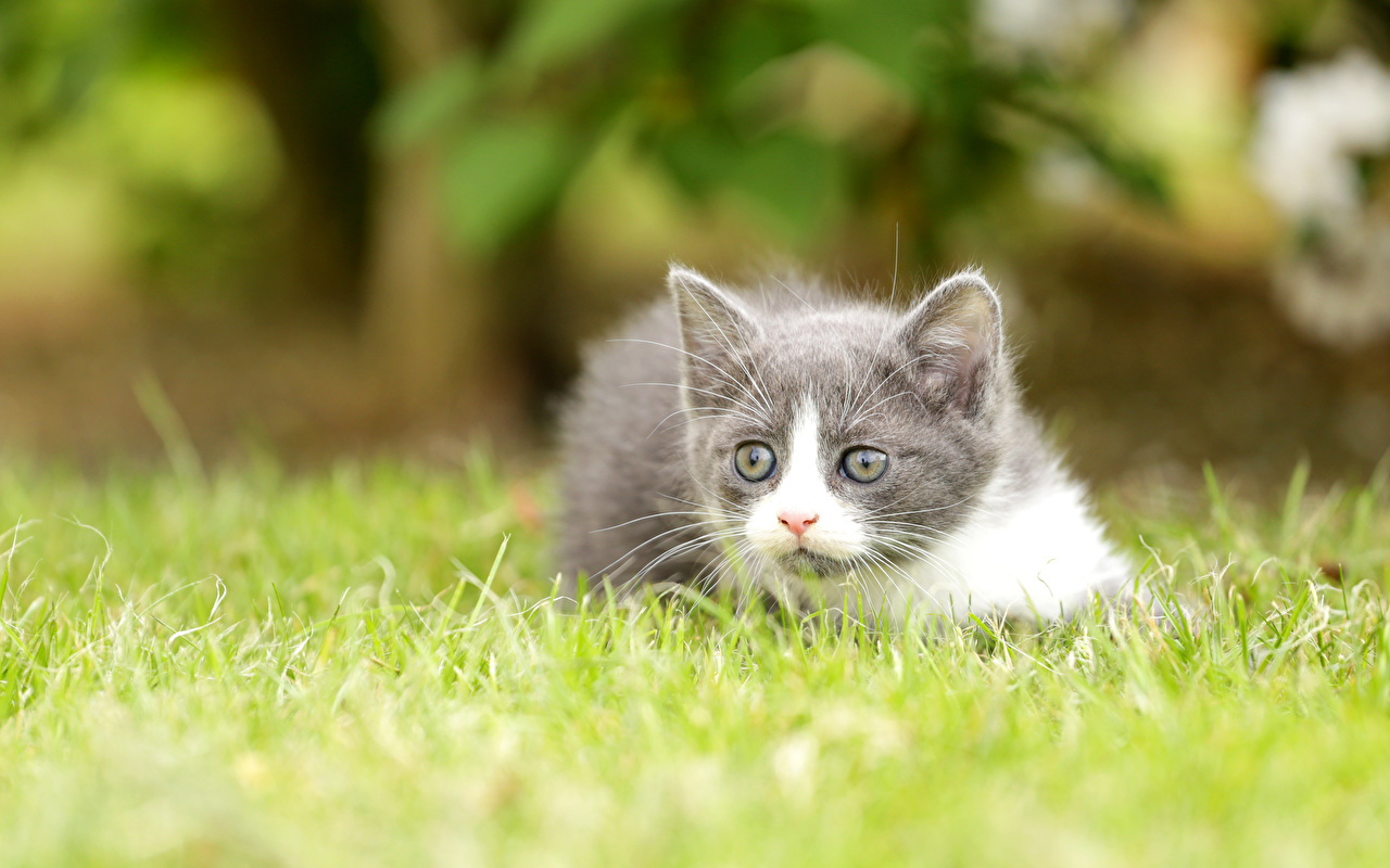 Фотография котенок Размытый фон Трава Взгляд Животные котят Котята котенка боке траве смотрит смотрят животное