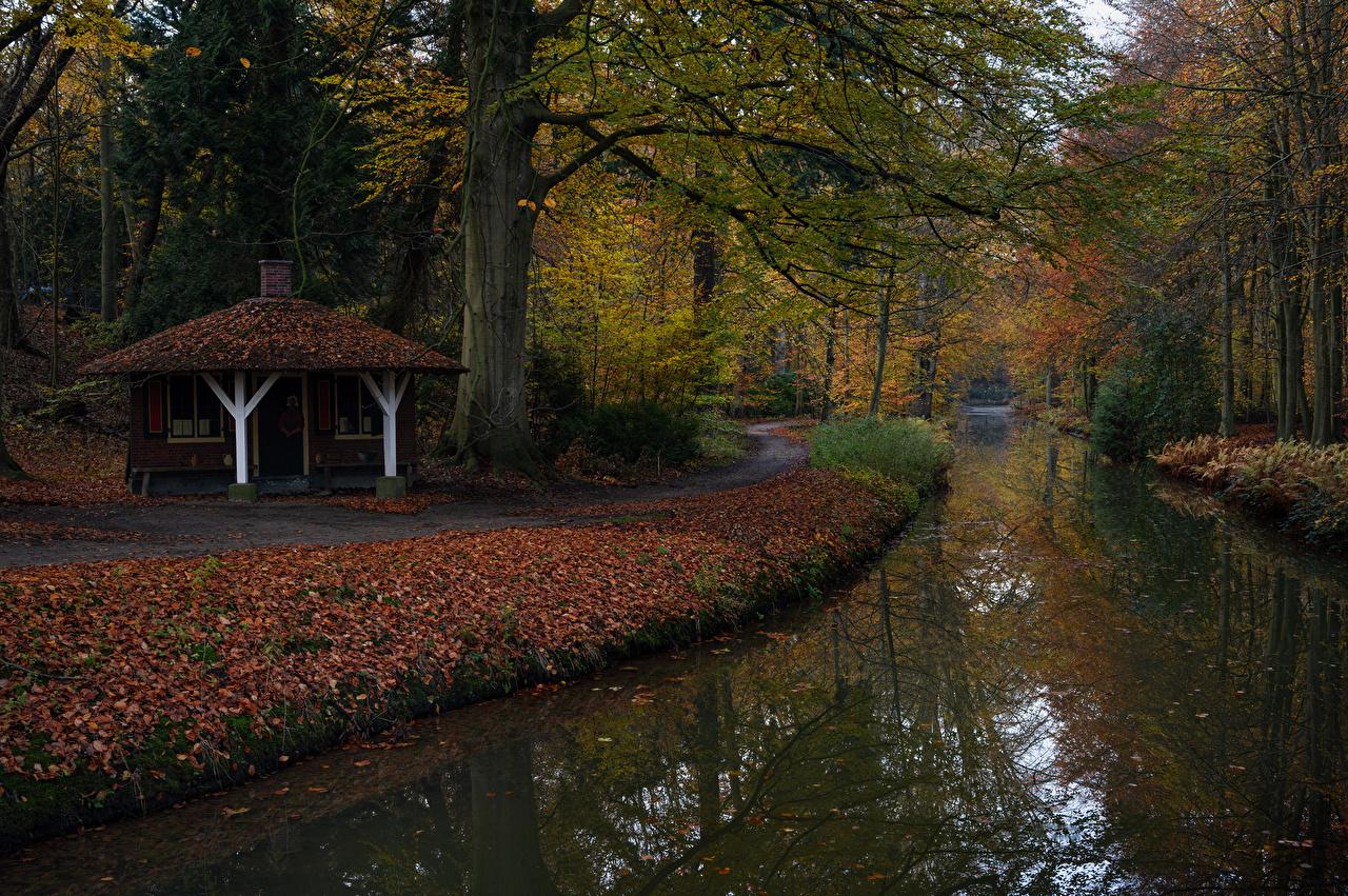 Фотография Листва Нидерланды Tuindorp Осень Природа Водный канал парк Деревья лист Листья голландия осенние Парки дерево дерева деревьев
