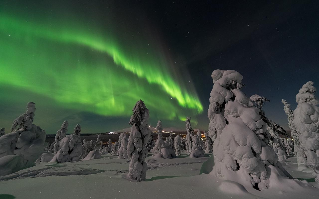 Фото Полярное сияние Ель зимние Природа Снег Ночь северное сияние Зима Ночные