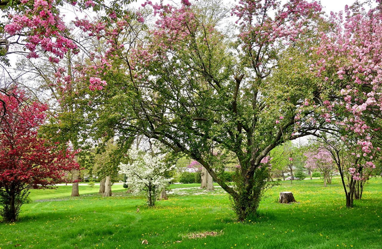 Обои для рабочего стола Весна Природа Сады Трава Цветущие деревья весенние траве