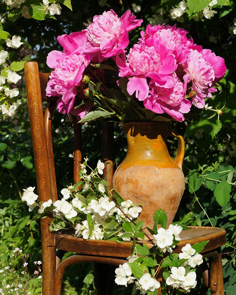 Обои Розовый Пионы Цветы Кувшин Стулья