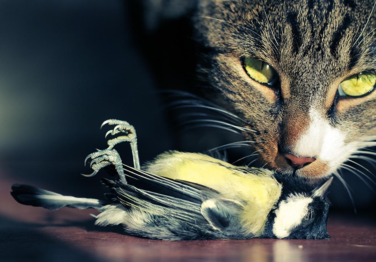 Картинка кот Птицы Мертвый труп смотрят Животные коты кошка Кошки птица Мертвец Взгляд смотрит животное