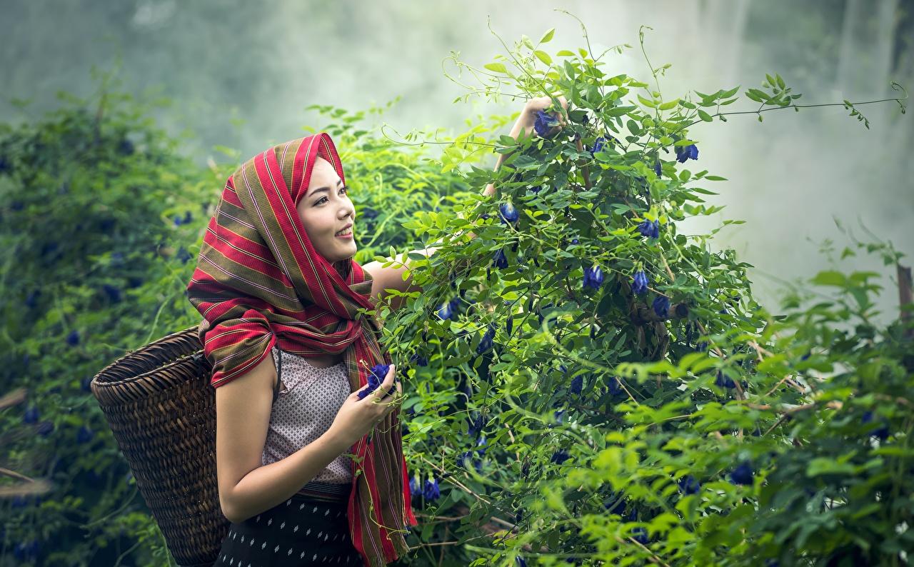 Картинки Улыбка Туман Девушки Азиаты Корзинка Кусты Корзина