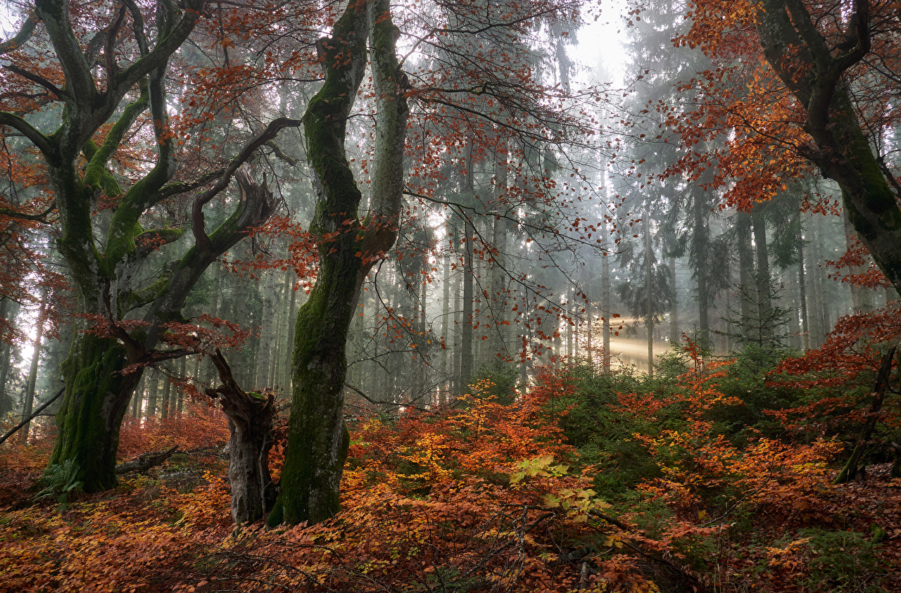 Фотография Листва осенние Природа лес Деревья лист Листья Осень Леса дерево дерева деревьев