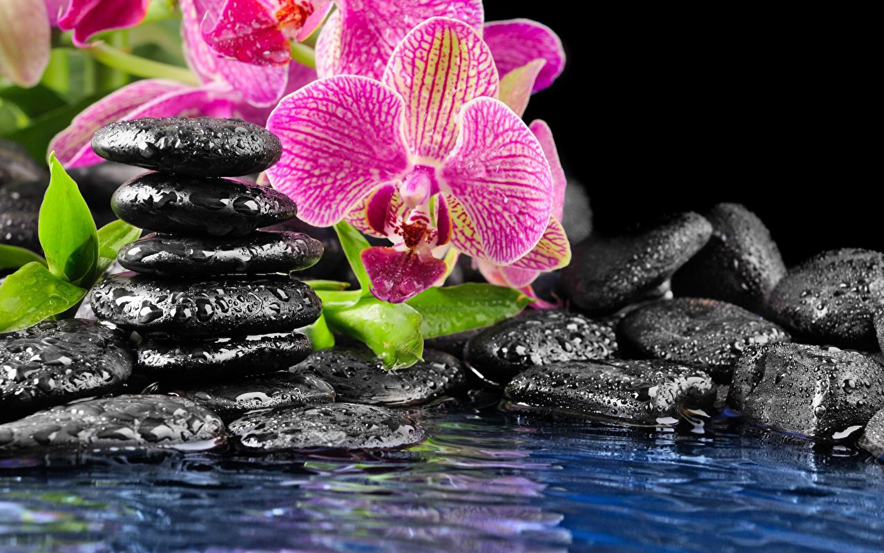 Цветы орхидеи родина