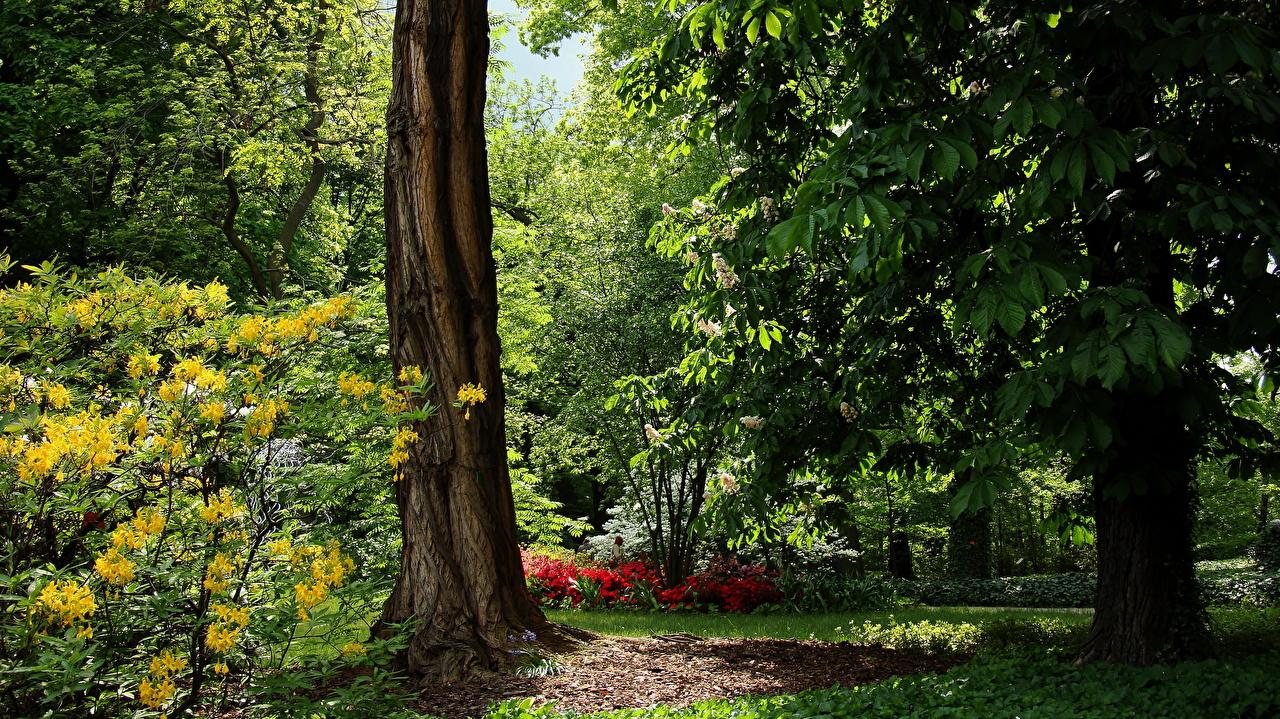 Картинки Вроцлав Польша Лето Природа Парки Деревья парк дерево дерева деревьев