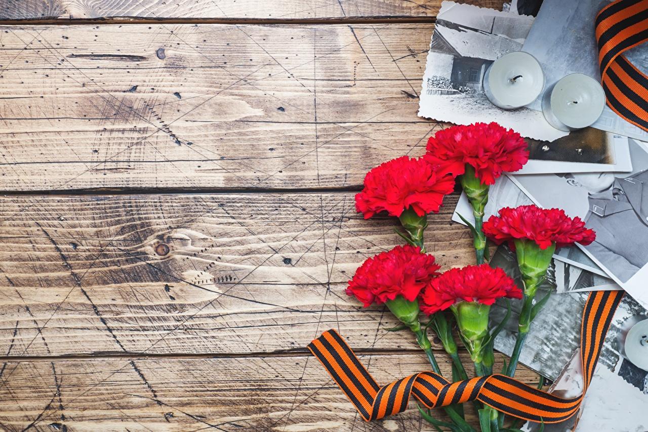 Картинка 9 мая цветок Гвоздики Доски День Победы Цветы гвоздика
