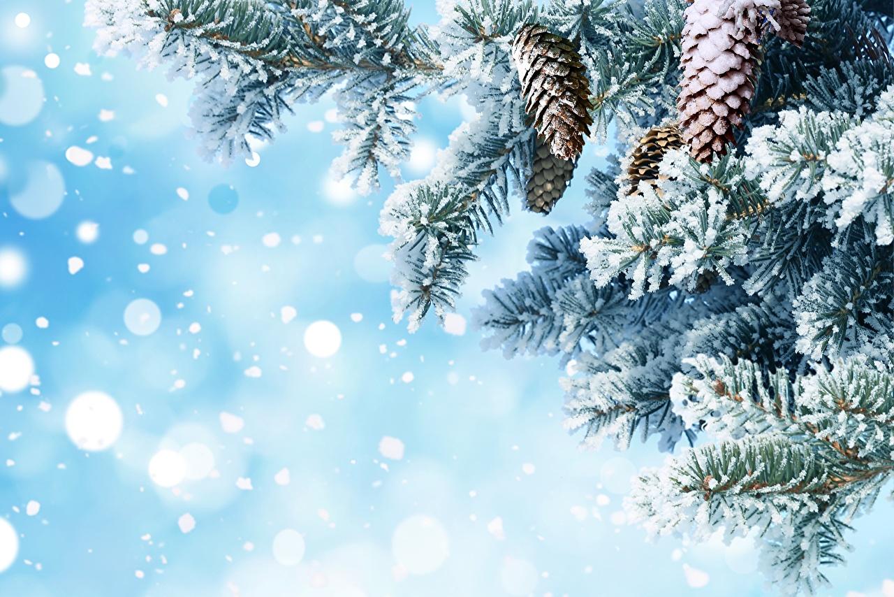 Обои елки в снегу