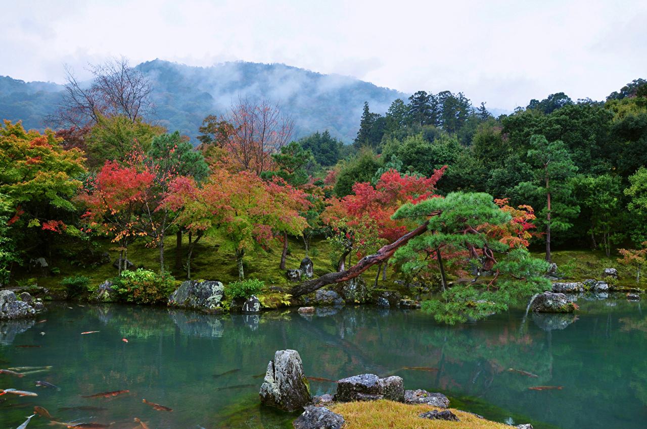 Картинка Киото Япония Tenryuji Temple garden Природа Пруд Парки Камни дерева парк Камень дерево Деревья деревьев