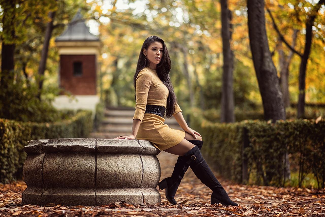 Фото Листва сапогов Lorena осенние Девушки ног Сидит Взгляд Платье лист Листья сапог Сапоги сапогах Осень девушка молодая женщина молодые женщины Ноги сидя сидящие смотрит смотрят платья