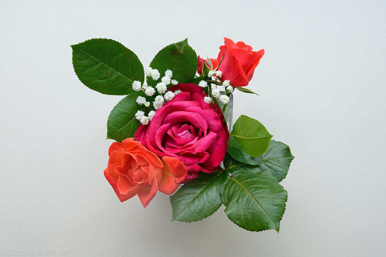 Обои для рабочего стола букет роза Цветы сером фоне Букеты Розы цветок Серый фон