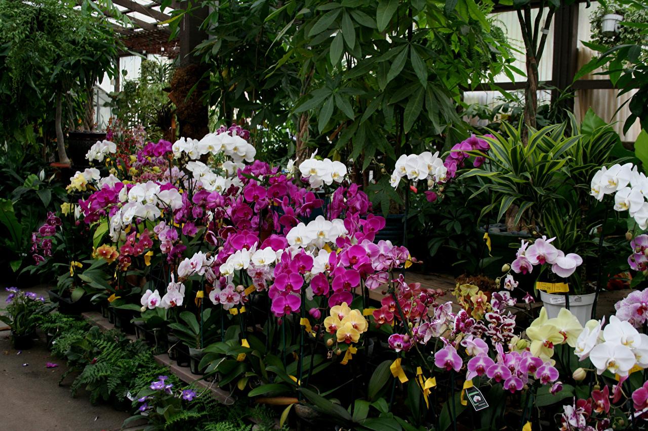 Фото Разноцветные орхидея Цветы Много Орхидеи цветок