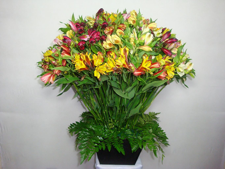 Картинка цветок Альстрёмерия Много Цветы