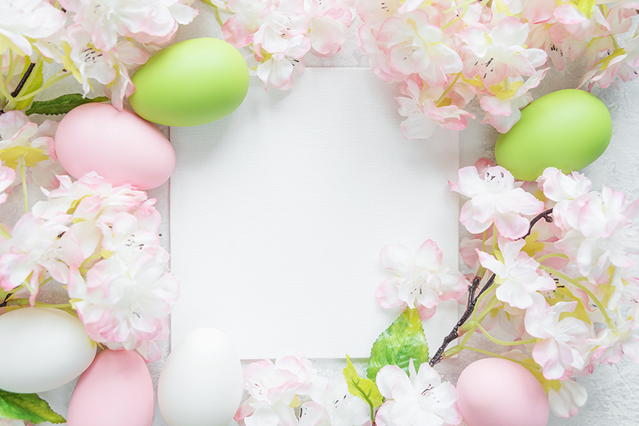 Фото Пасха Лист бумаги Яйца Шаблон поздравительной открытки Цветущие деревья яиц яйцо яйцами