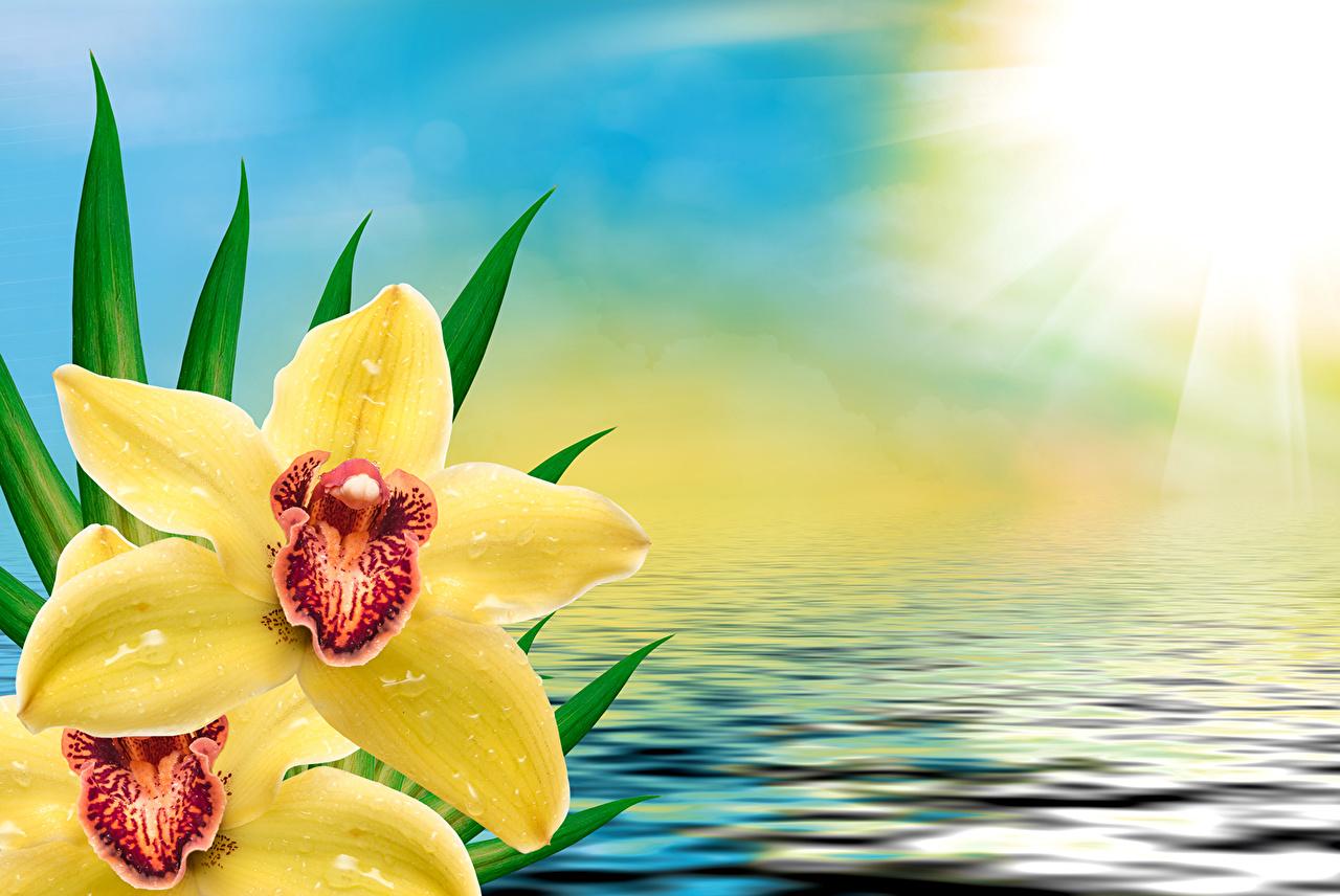 Фото желтая орхидея Цветы Вода желтых желтые Желтый Орхидеи цветок воде