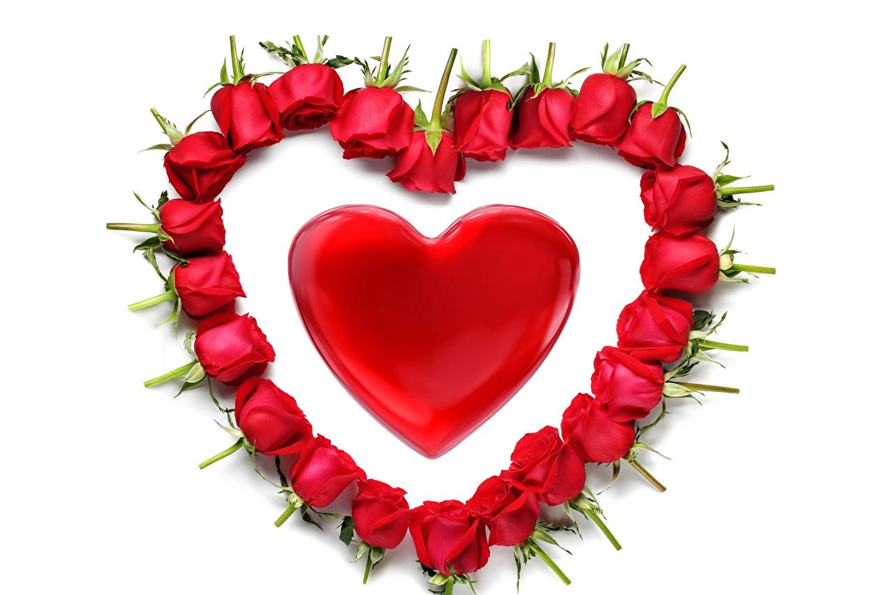 Фото День всех влюблённых Сердце Розы Цветы День святого Валентина серце сердца сердечко цветок