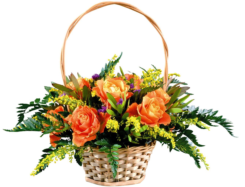 Ферма Айрис Цветок Стихий  Игры про цветы  MyPlayCity