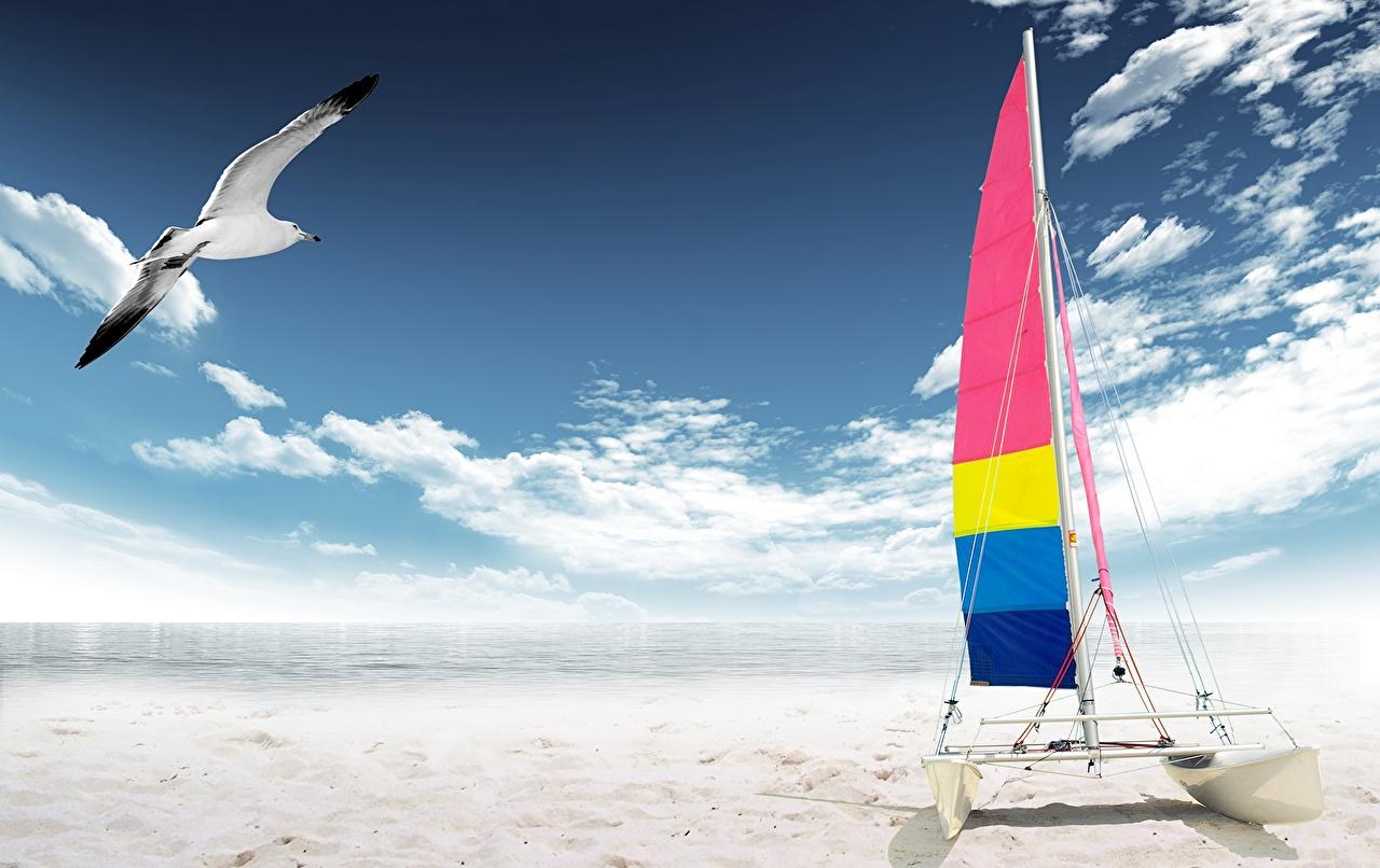 Фото чайки Природа Небо Песок Лодки Парусные облачно Чайка песка песке Облака облако