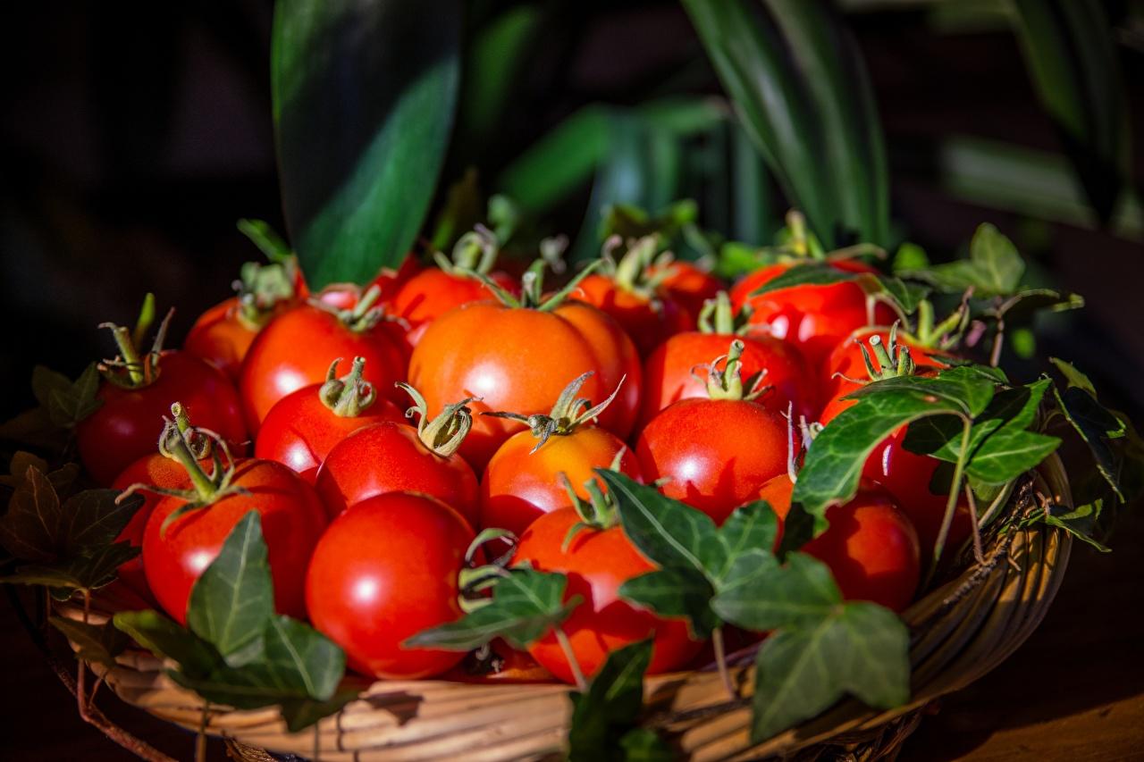 Фотографии красная Помидоры корзины Продукты питания Много Томаты красных Красный красные Корзина Корзинка Еда Пища