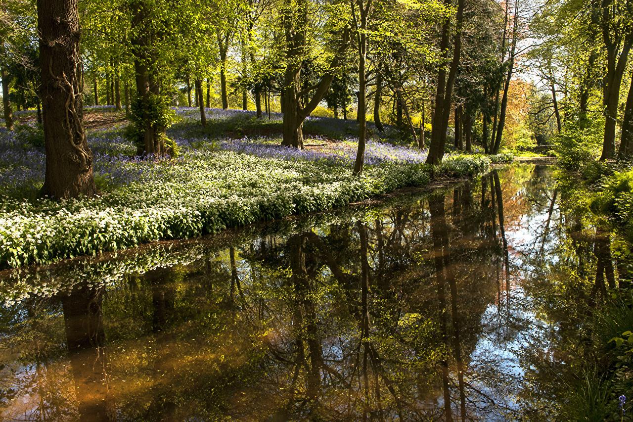 Обои для рабочего стола Великобритания Whitmore Весна Природа Леса Пруд Отражение Подснежники Деревья весенние лес Галантус отражении отражается дерево дерева деревьев