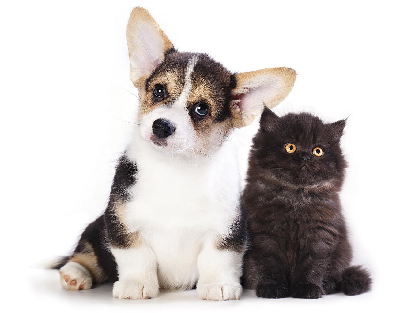 Обои кот, Собака, щенок. Собаки foto 15
