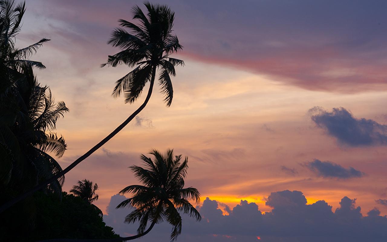Фотографии Мальдивы силуэта Природа Пальмы рассвет и закат облачно Силуэт силуэты пальм пальма Рассветы и закаты облако Облака