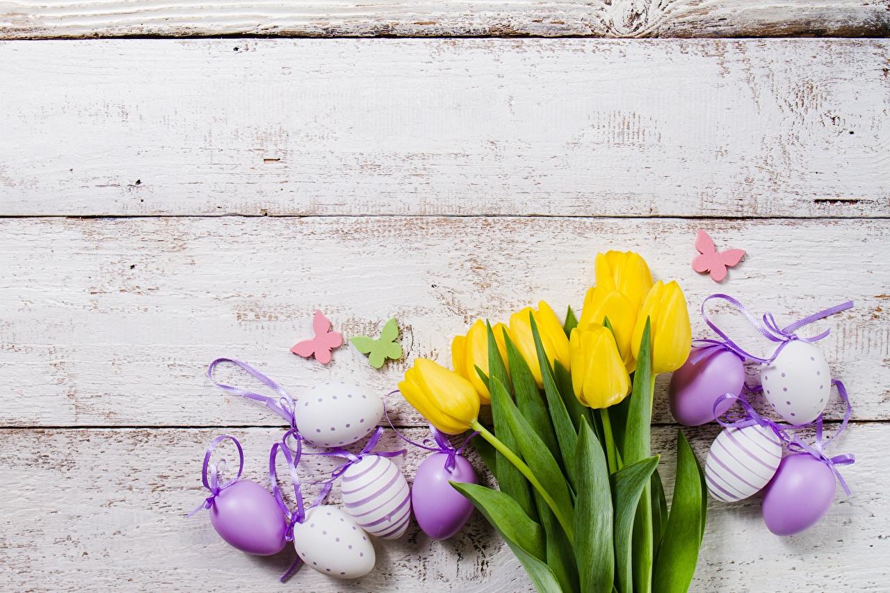 Картинки Пасха Яйца Тюльпаны Цветы Доски