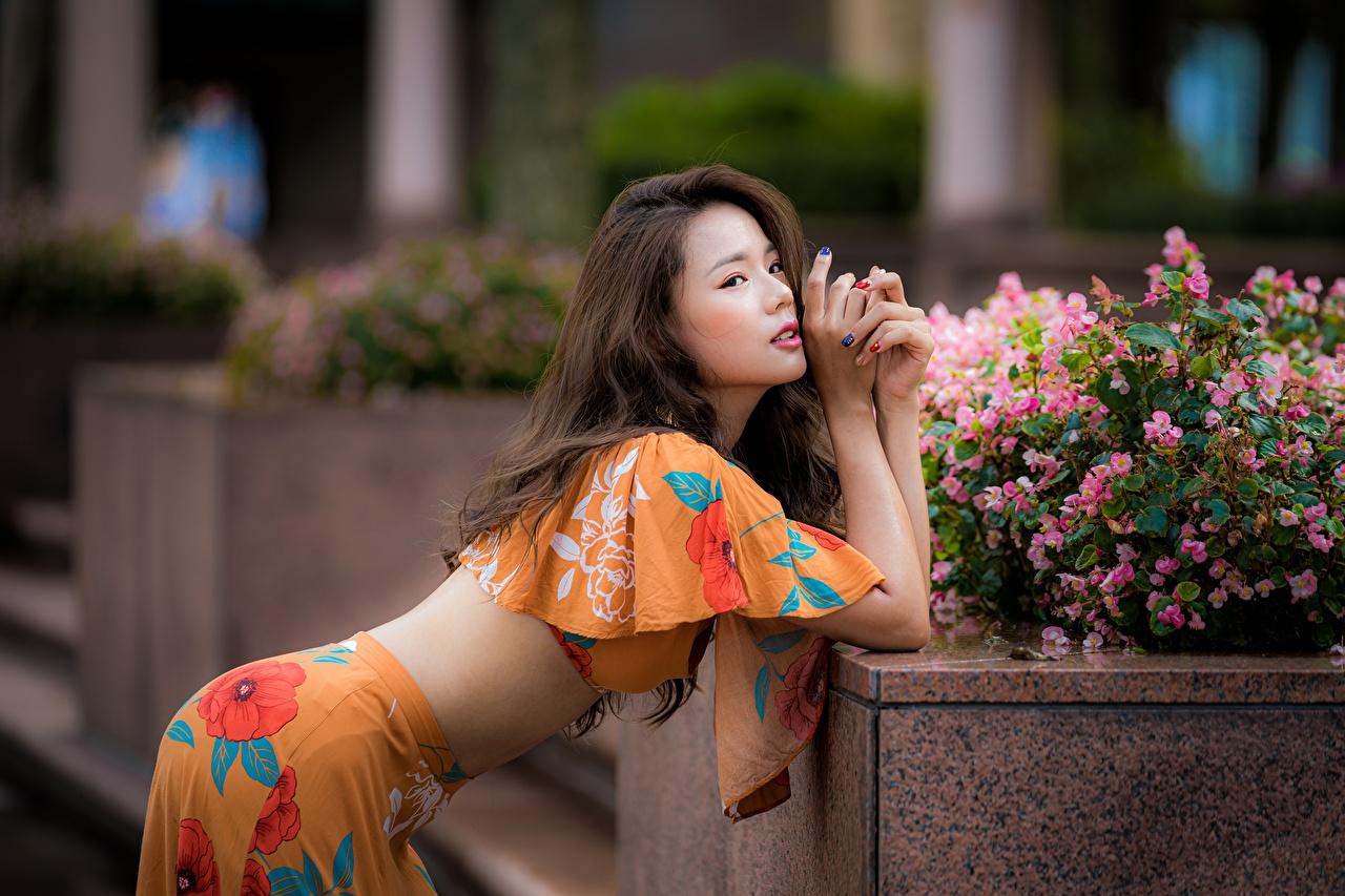Картинка Шатенка Размытый фон Милые позирует молодые женщины азиатки шатенки боке Поза милый милая Миленькие девушка Девушки молодая женщина Азиаты азиатка