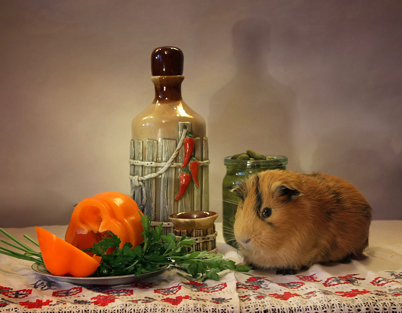 Обои для рабочего стола Морские свинки бутылки перец овощной Животные Перец Бутылка животное