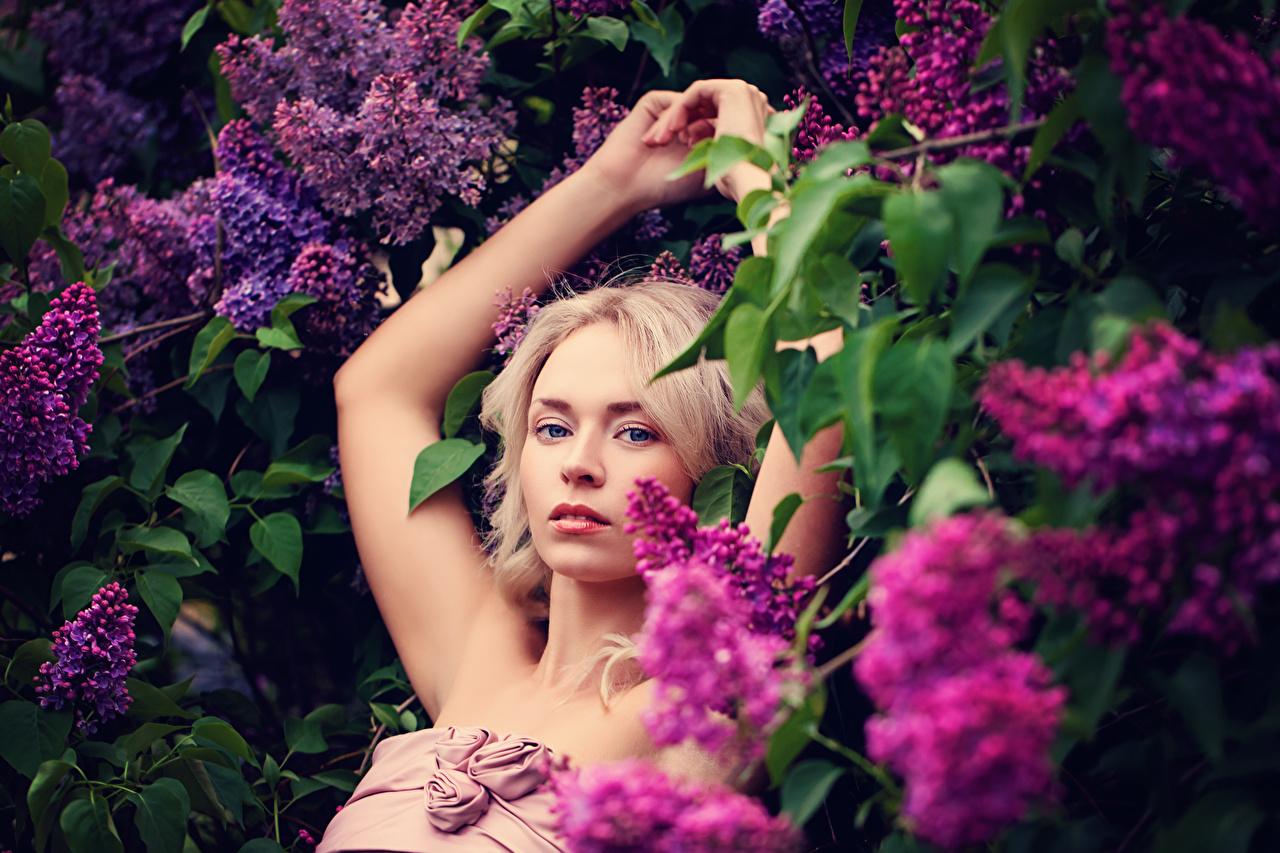 Фотографии блондинки молодые женщины Сирень рука ветка смотрят блондинок Блондинка девушка Девушки молодая женщина Руки Ветки ветвь на ветке Взгляд смотрит