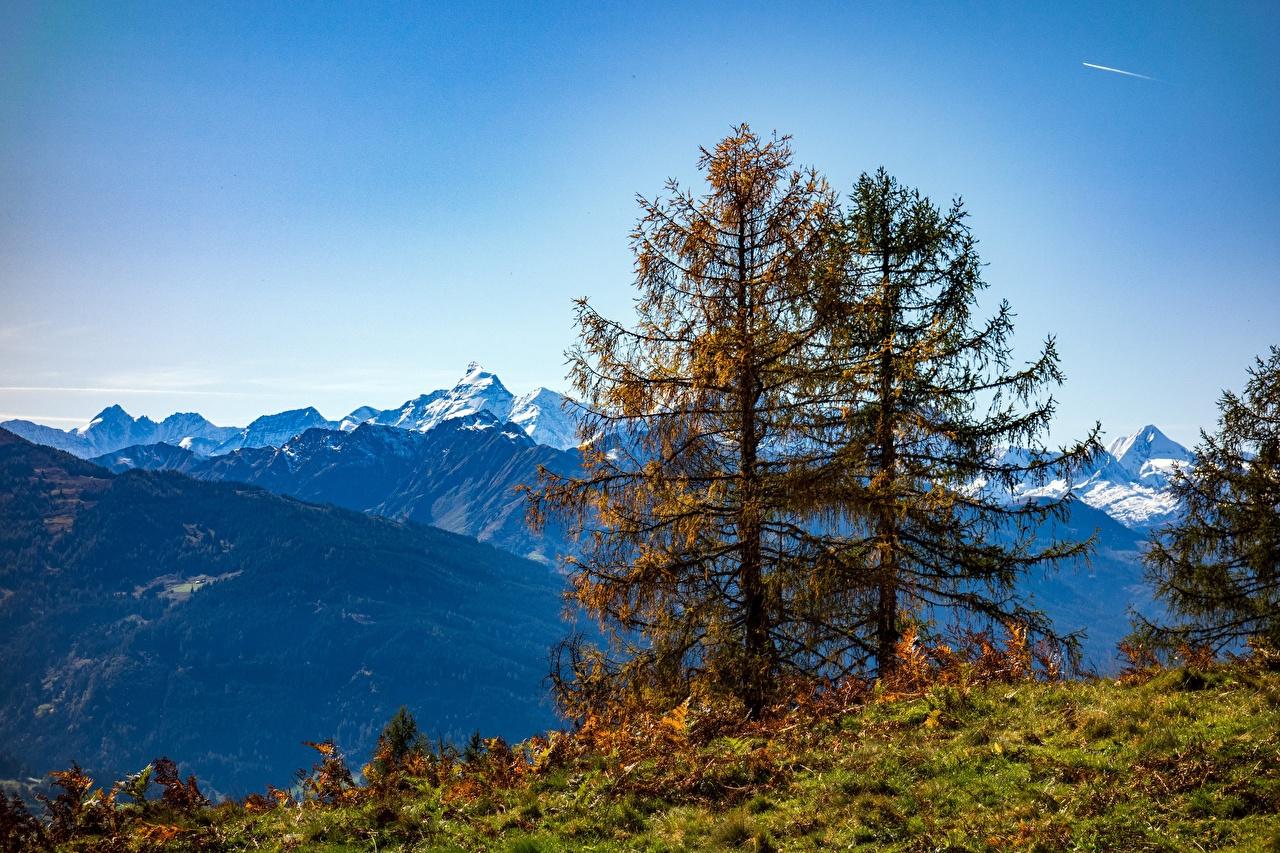 Фотографии Австрия гора Природа осенние Деревья Горы Осень дерево дерева деревьев
