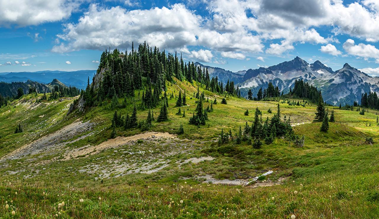Картинка штаты ели гора Природа Пейзаж Трава облачно США Ель Горы траве облако Облака