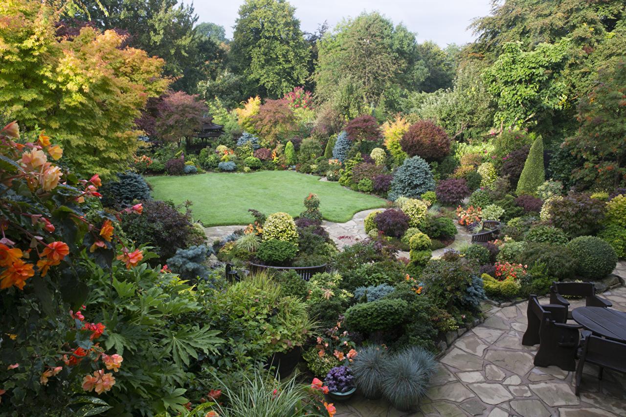 Фотография Англия Walsall Garden Природа Сады Газон Кусты Дизайн газоне кустов дизайна