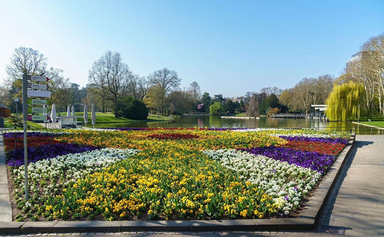 Фотографии Германия Botanischer Garten Karlsruhe Природа Пруд Парки газоне парк Газон