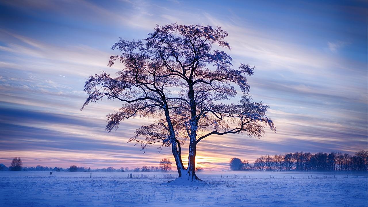 Фото Германия зимние Природа снеге Вечер Деревья Зима Снег снега снегу дерево дерева деревьев