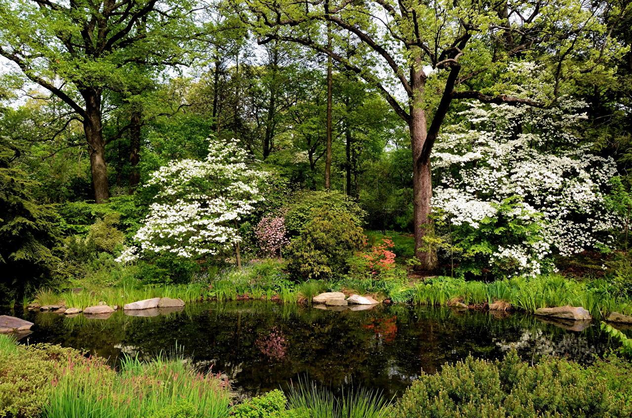 Картинки Нью-Йорк америка Belmont Природа Сады Пруд США штаты