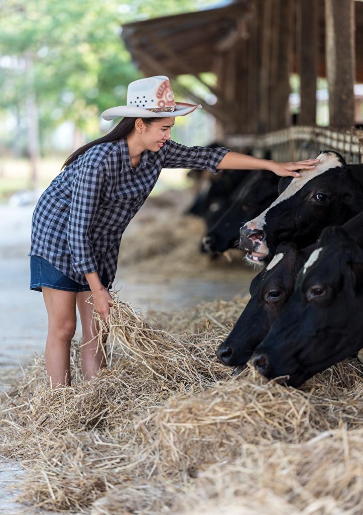 Фото Корова Брюнетка Шляпа Девушки Азиаты Сено Животные