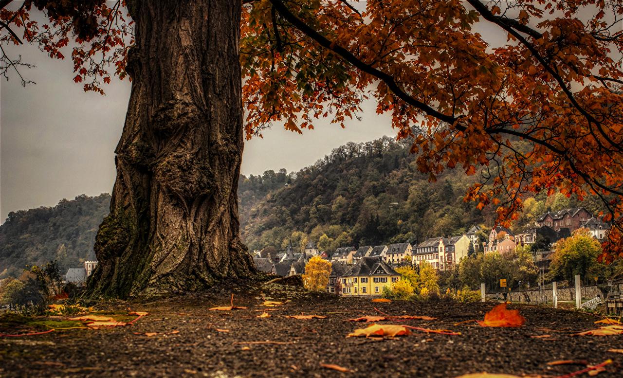 Картинка Германия Sankt Goar осенние Ствол дерева ветвь Города Здания Осень Ветки ветка на ветке Дома