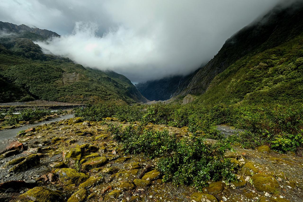 Картинки Новая Зеландия Franz Josef Glacier Valley тумана гора Природа мха Туман тумане Горы Мох мхом