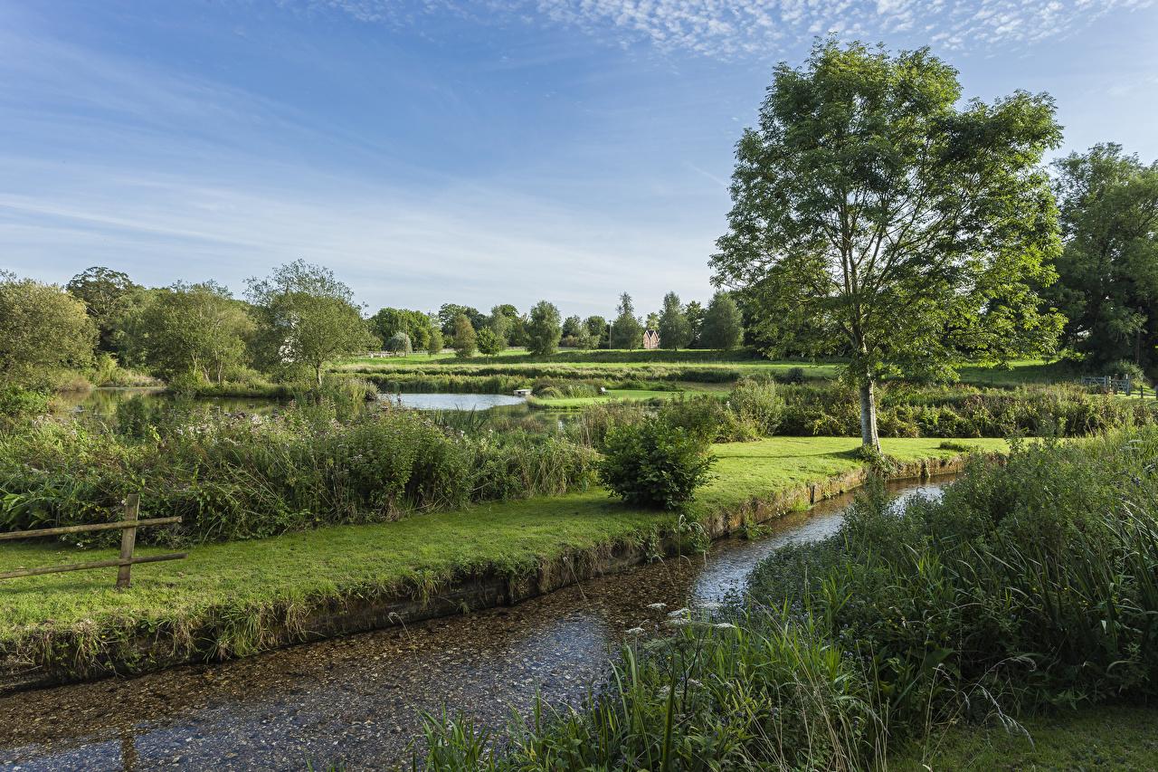 Фотографии Англия Stoke Charity River Dever Природа река кустов деревьев Реки речка Кусты дерева дерево Деревья