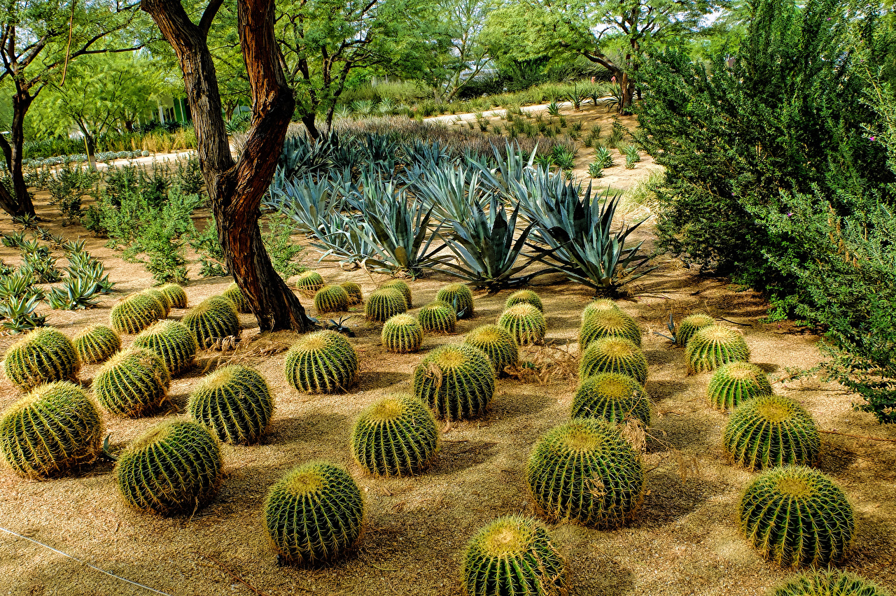 Фотографии штаты Sunnylands Rancho Mirage Природа Сады Кактусы США