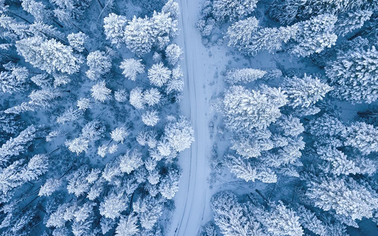 Фотография Зима Природа лес Снег Дороги Сверху деревьев зимние Леса снеге снега снегу дерево дерева Деревья