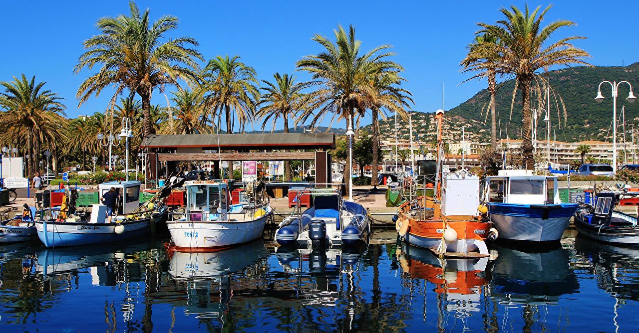 Фотография Франция Port Cavalaire-Sur-Mer пальма Пирсы Лодки Катера залива Уличные фонари Города пальм Пальмы Залив заливы Причалы Пристань город