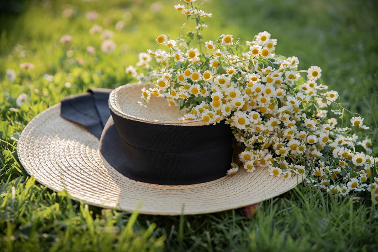 Картинки шляпе цветок Ромашки траве шляпы Шляпа Цветы ромашка Трава